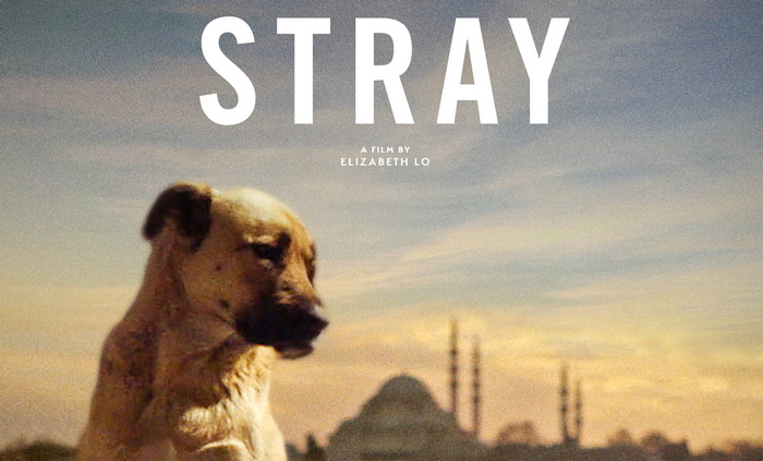 STRAY - Watch at Home